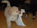 17-11-2009_de_sidste_timer_hos_opdrtteren-_foto_-_tesoro_mio
