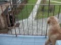 2010-04-03_2_besoeg_i_storby