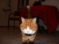 2012-12-31_oskar_the_cat