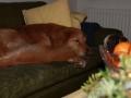 en-juletraet-hund