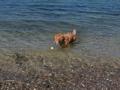 en-eftermiddag-paa-stranden-kopi