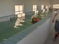hovawart-i-hundesvoemmehallen