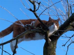 O. na drzewie 3